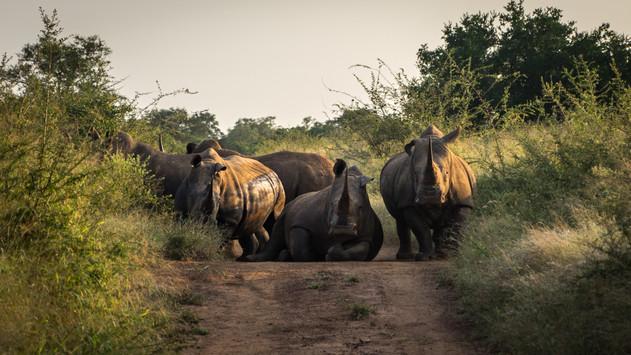 Rhinos Hlane Swazi (2 of 5).jpg