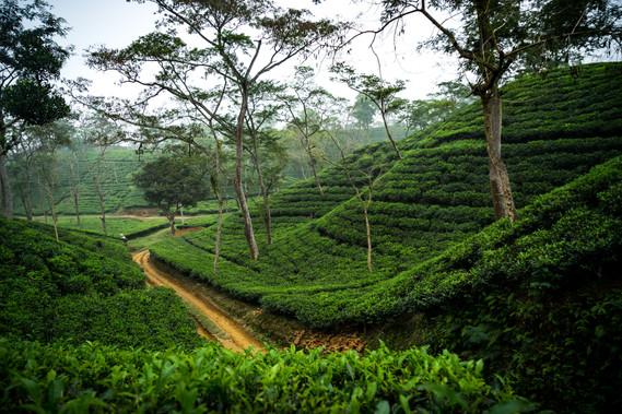 Bangladesh-09571.jpg