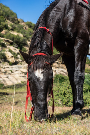 Melealea Horse Rides (7 of 9).jpg