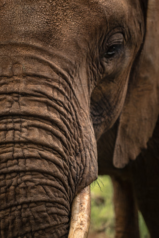 Elephant Breakfast Elephant Face Livings