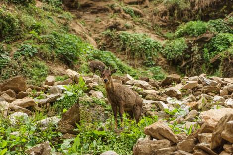 Chery Temple Hike Bhutan (2 of 4).jpg
