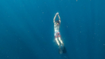 Ross Snorkel Whale Shark (2 of 5).jpg