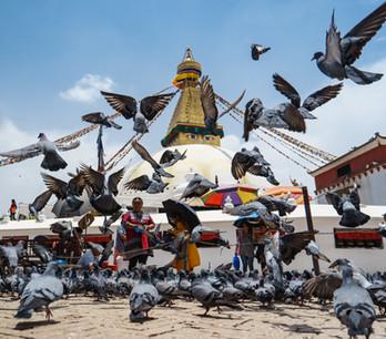 Boudha Stupa (1 of 1).jpg
