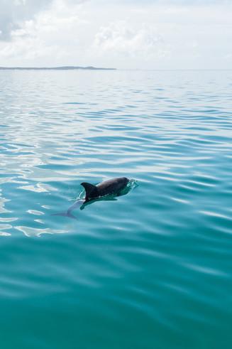 Solo Dolphin Bahia Mar Vilankulos (1 of 1).jpg