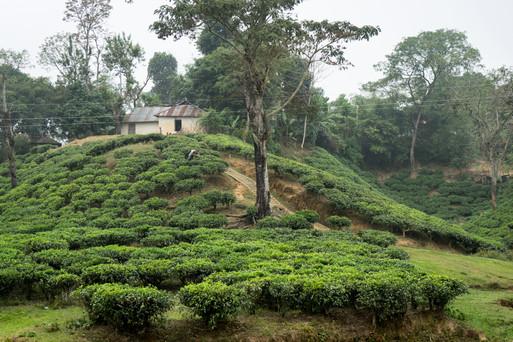 Bangla (1 of 12).jpg