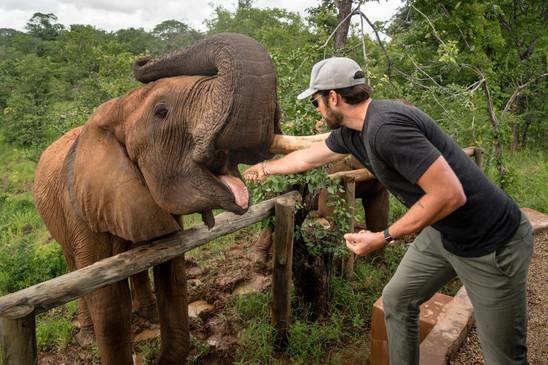 Elephant Breakfast Travis Feeding Living