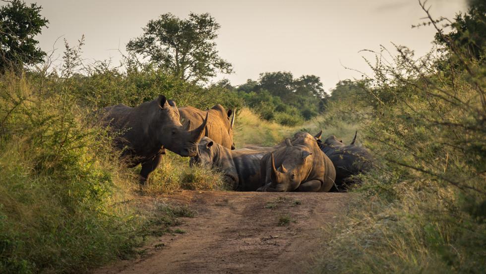 Rhinos Hlane Swazi (1 of 5).jpg