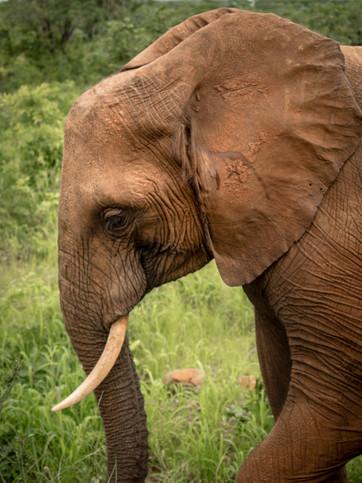 Elephant Breakfast Solo Elephant Livings