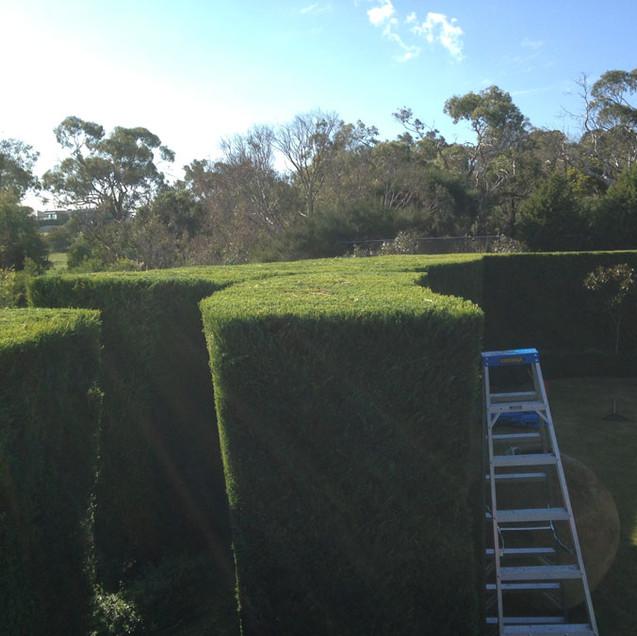 large hedge.jpg