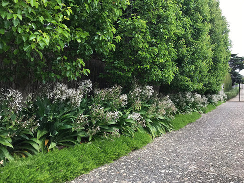 driveway landscaping.jpg