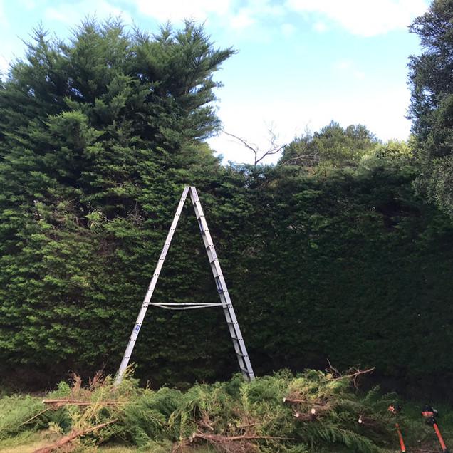 hedge trimming.jpg