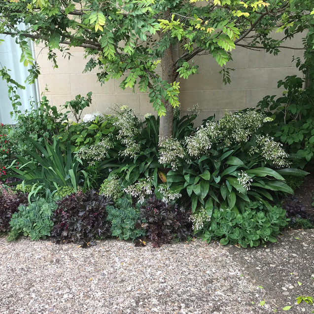creating garden.jpg