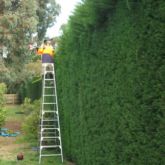 hedge trimming mornington peninsula.jpg