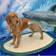 Sharks dont scare me.jpg