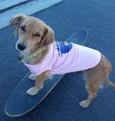 Skater Dog.png