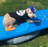 Scooter the Surf Therapy Dog.jpg