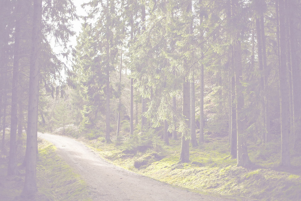 Woodland%20Path_edited.jpg
