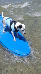 Snoopy the Surfing Pup.jpg