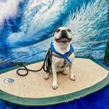 I Love Surfing.jpg