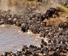 Guided-Wildebeest-Great-Migration-Safari