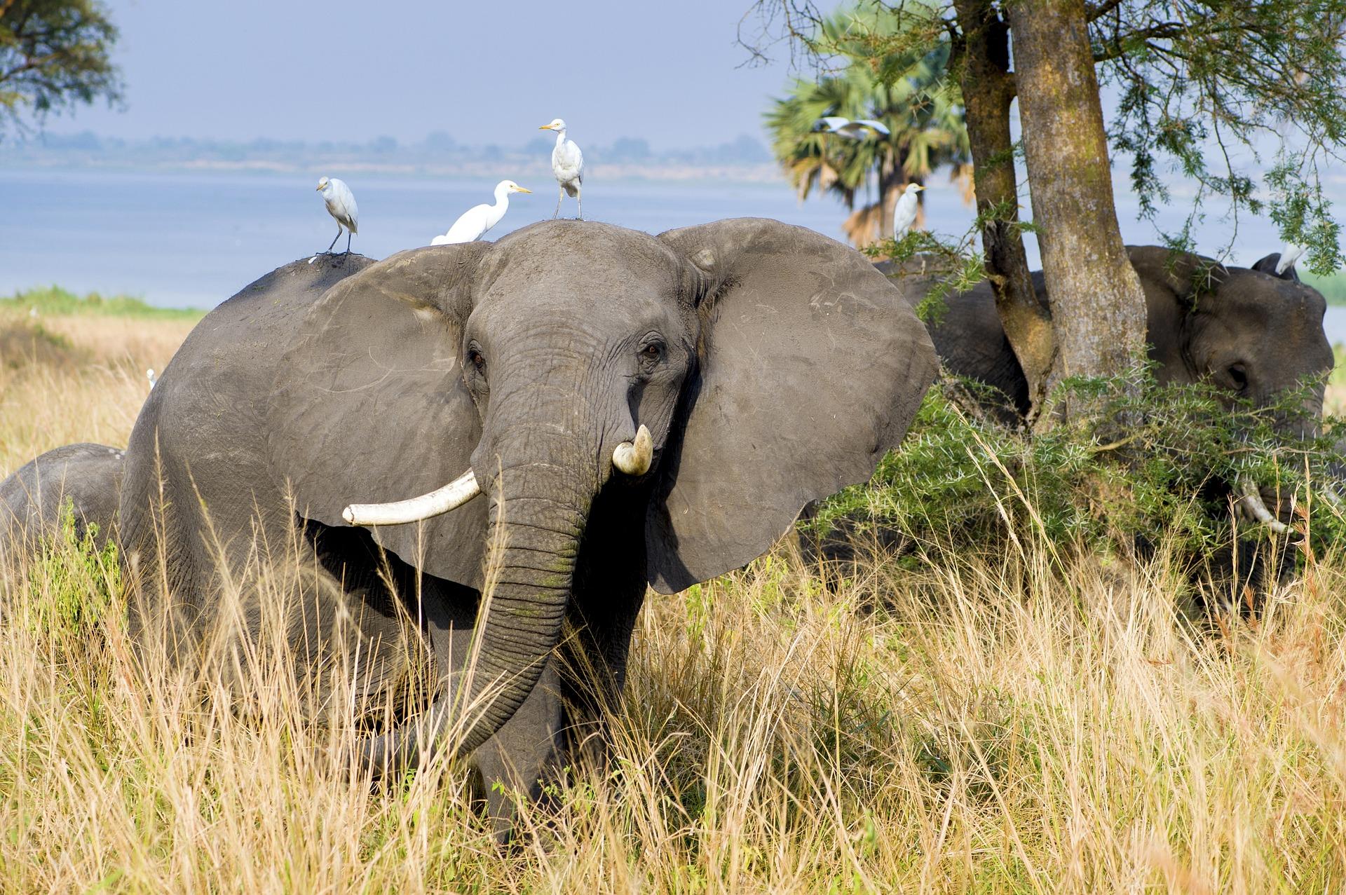elephant-2108855_1920