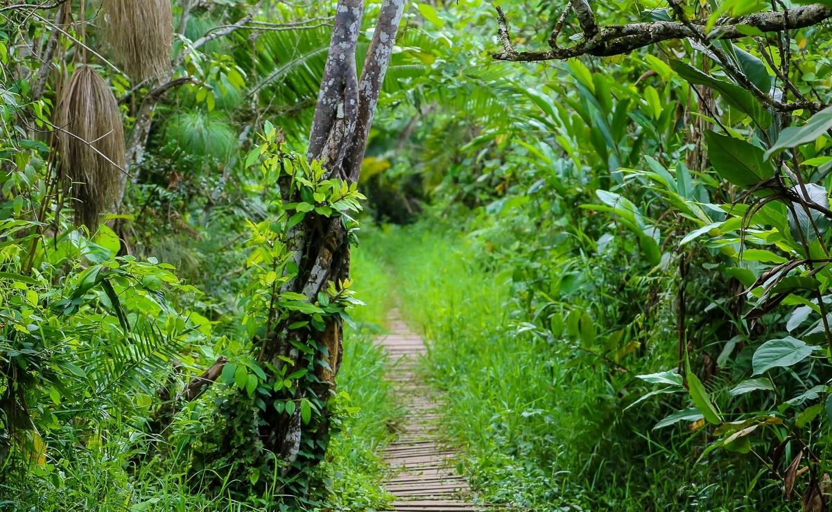 Bigodi Wetlands Uganda