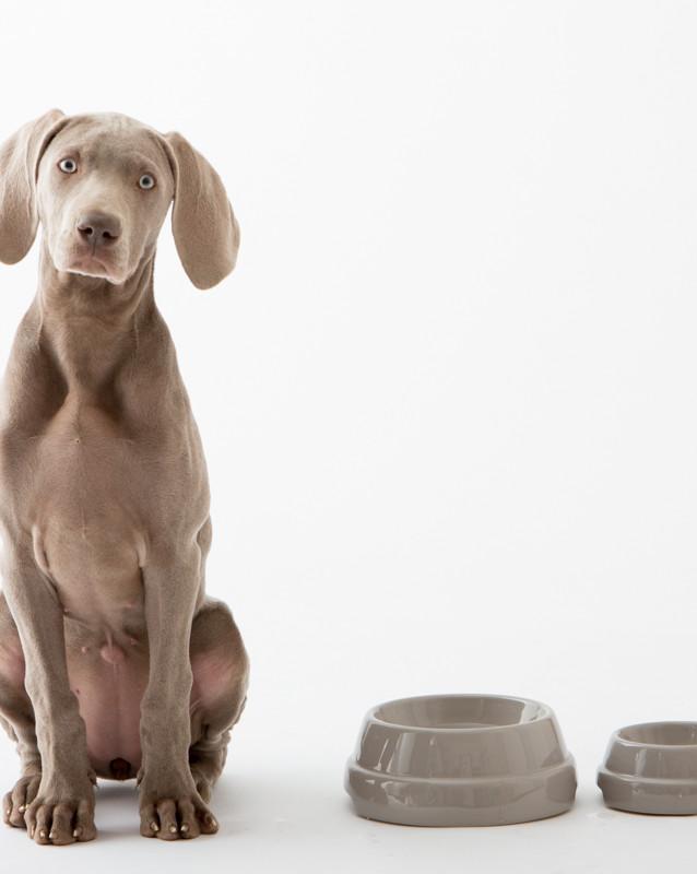Hundenapf Keramik_ 2.8