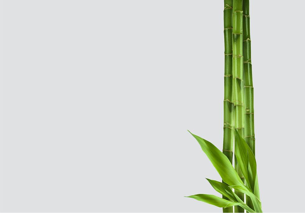 bamboo on grey.jpg