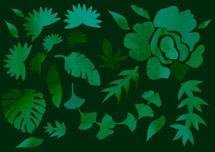 Viidakko kotona