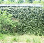 Garden-017.jpg