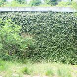 Garden-018.jpg