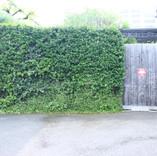 Garden-020.jpg