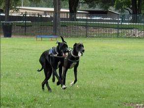 Katy Dog Park to Get Security Camera to Deter Pet Dumping Problem