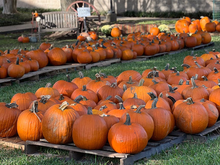 Where Katy Families Find Pumpkins and More