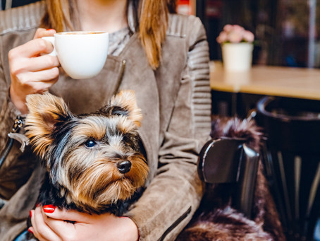 Luxurious Dog Cafe Opening this Fall in LaCenterra