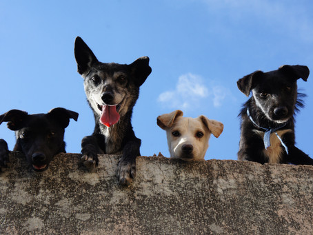 What are the most common disorders diagnosed in dogs in the UK?