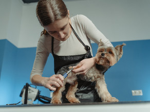 I'm a dog groomer, what does sharing veterinary information have to do with me?