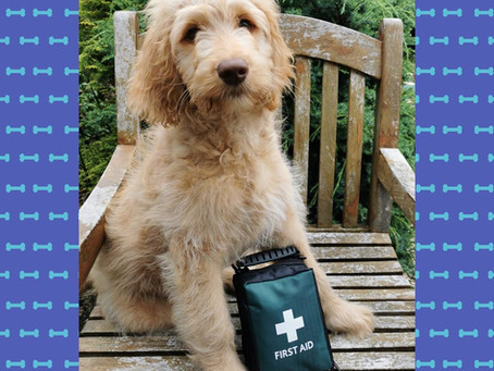 Dog First Aid Kits: What to Include
