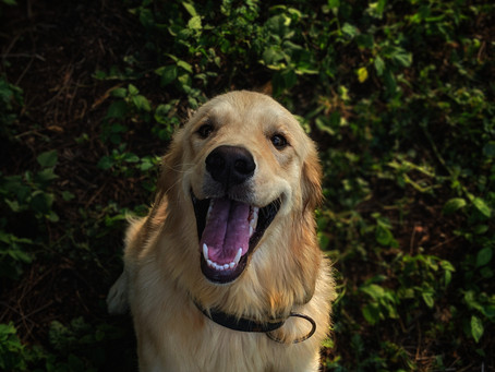 10 things your vet wants you to know about... DENTAL DISEASE IN DOGS