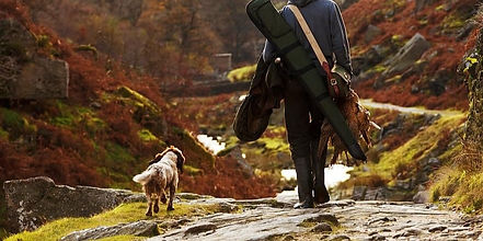 animal-bird-catch-dog-field-gear-gun-hun