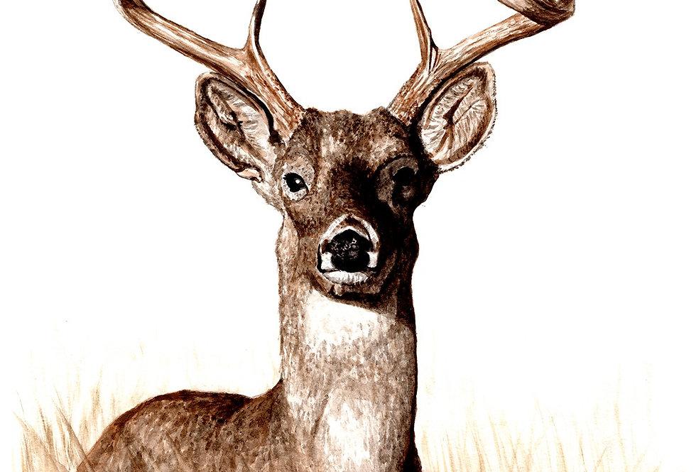 Deer - Print