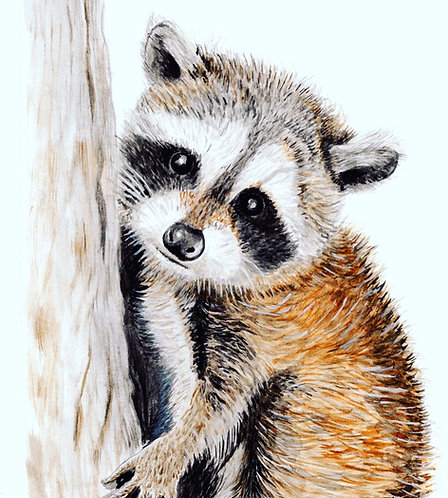 Baby Raccoon - Print
