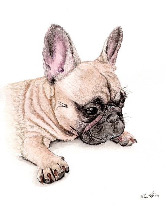 French Bulldog - Print