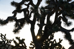 2018  Joshua Tree, CA-4.jpg