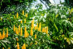 2016 Lincoln Park Botanical Gardens