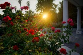 2016 Capitol Rose Garden