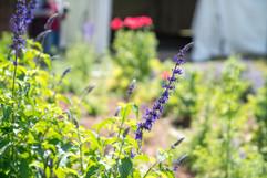 2019 Botanical Gardens