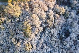 2020 Snow in Austin, Aerial