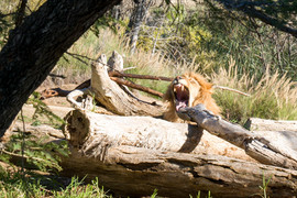 2018 Wild Animal Park