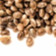 hemp-seeds_edited.jpg